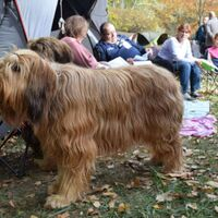 Briard Dogs And Their Relaxing Family